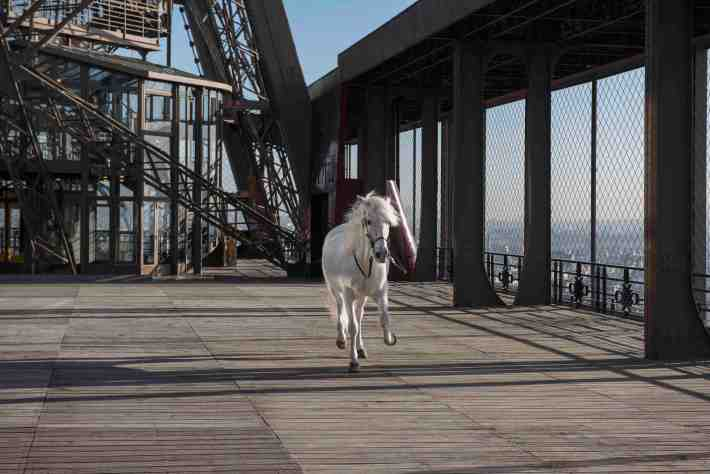 "Paola Pivi, ""Yee-Haw (horse)"" 2015, Photo: Hugo Glendinning, Courtesy Galerie Perrotin"